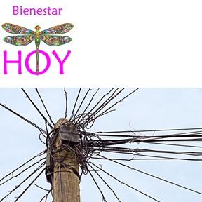 BHOY 029 – Organiza tu nuevo comienzo con Indira Molina
